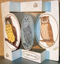 Owls Pop Out Card