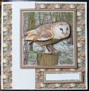 cup375614_15 - card01 - Barn Owl 3D Decoupage woodland & Background