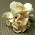Paper Flower Making 03 07