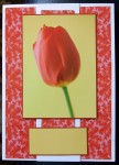cup53817_5 - card01 - Gorgeous Red Tulip Pyramid