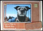 cup338913_1749 - card01C - Beauty Dog Card Kit
