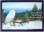 cup451748_470 - card01C - White Owl