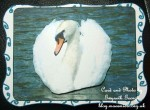 cup469198_5 - card01 - Beautiful Swan Watercolour Painting Cu4cu