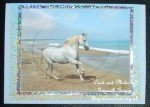 cup473234_1886 - card01 - Beautiful White Horse on Beach Oval Pyramid Card Front