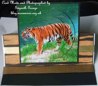 cup256887_923 - card03 - Bengal Tiger