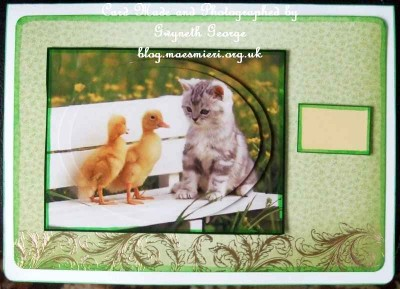 cup449624_1886 - card01 - Ducklings and Kitten on Bench Oval Pyramid Card Front