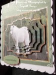 cup522341_8 - card03- white wolf card with shaped layers