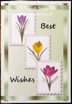 Spring Feaver Elements card02 02