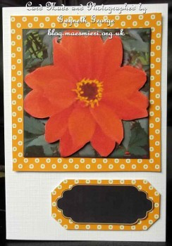cup37996_24 - card01 - Orange Flower Topper